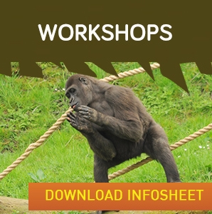 Workshops widget