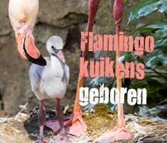 flamingo widget