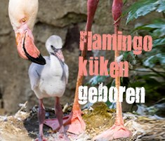 flamingo widget DE