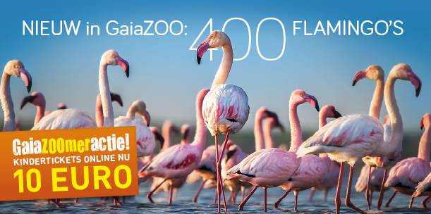 GaiaZOO-slider-flamingo